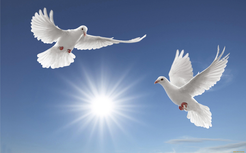 картинки с голубями красивые пожелания для ребят